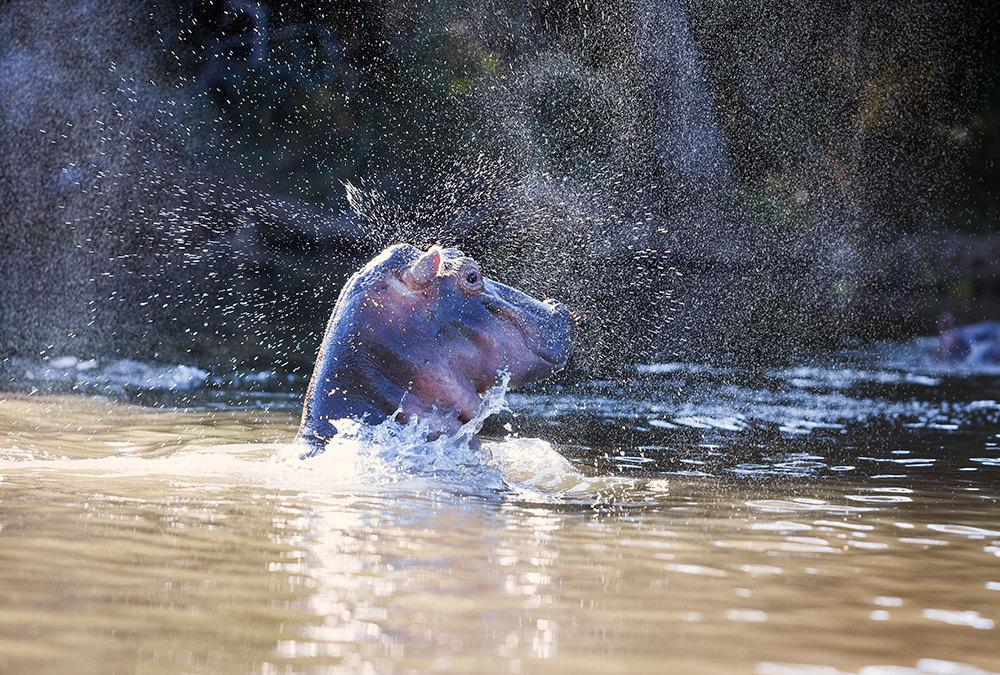 Safari Zambia – Kanoën tussen nijlpaarden
