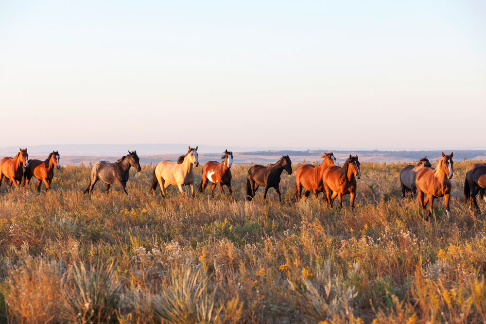 Wild Horse Sanctuary, South Dakota, Zuid Dakota, Verenigde Staten