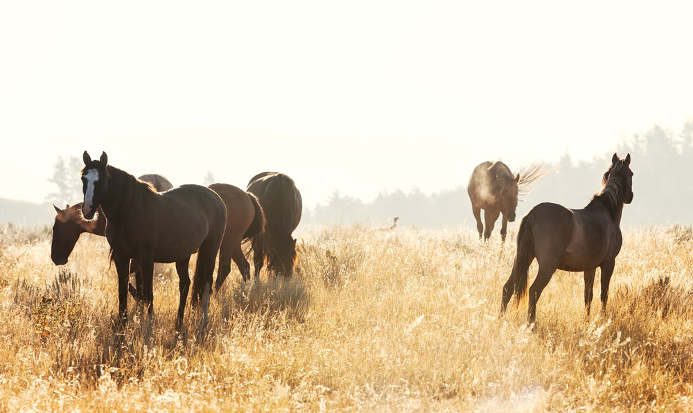Wild Horse Sanctuary, South Dakota, Verenigde Staten