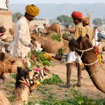Kamelenfestival in Pushkar, Rajasthan, India