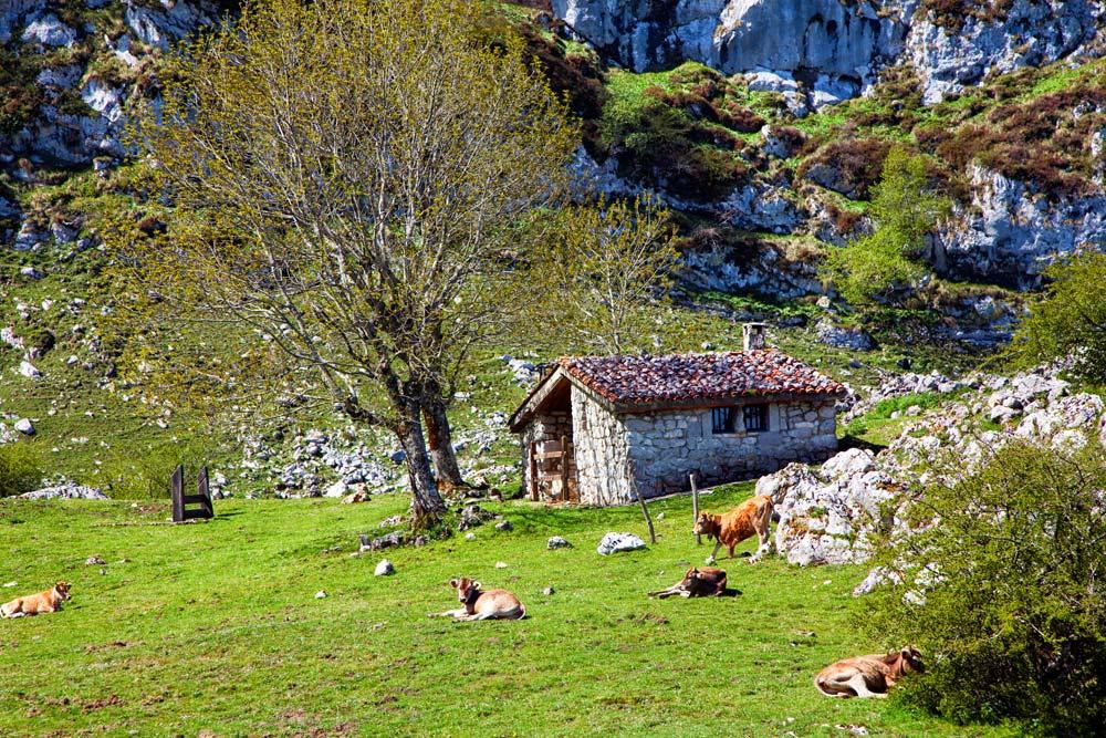 Picos de Europa, Asturie, Spanje