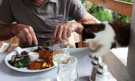 Niolo, Corsica: de hongerige kat