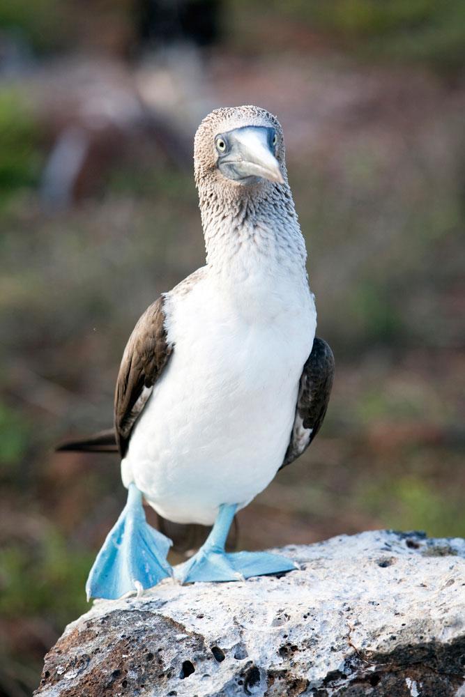 Galapagos vakantie eilanden North Seymour
