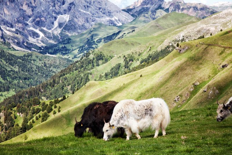 Col Rodela in Val di Fassa, Italie