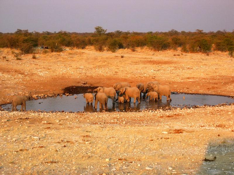 Op safari in Etosha National Park in Namibie, Afrika. Olifanten