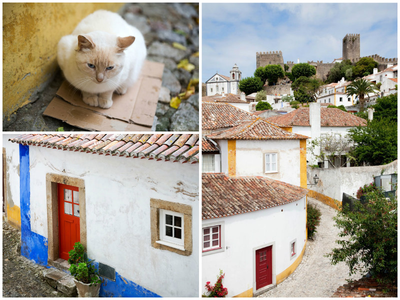 The whitewashed houses of Obidos, even the cat is white!, Portugal