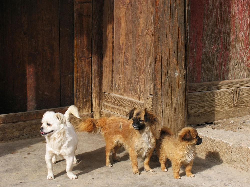 Het landelijke Baisha in Yunnan, China