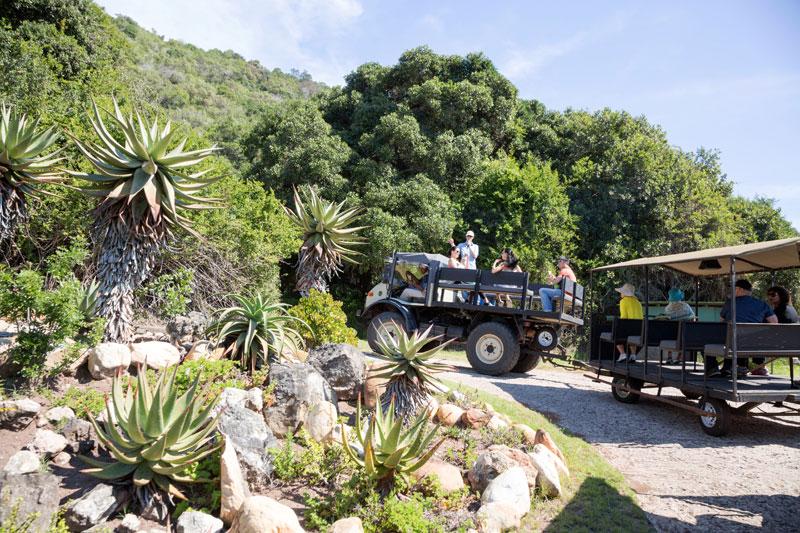 Knysna, Zuid-Afrika: de makkelijke weg naar boven in het natuurpark