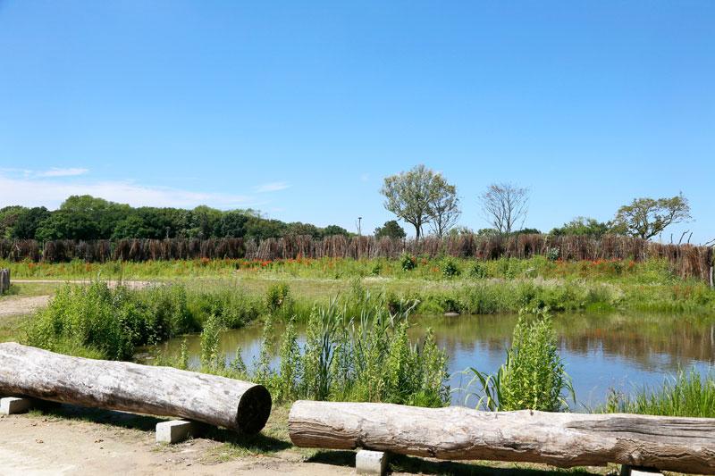 Belgische kust: het vernieuwde Zwin Natuur Park