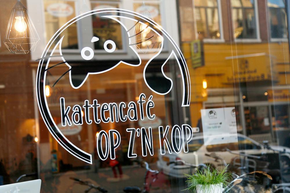 Stedentrip Groningen: het populaire kattencafe op z'n Kop