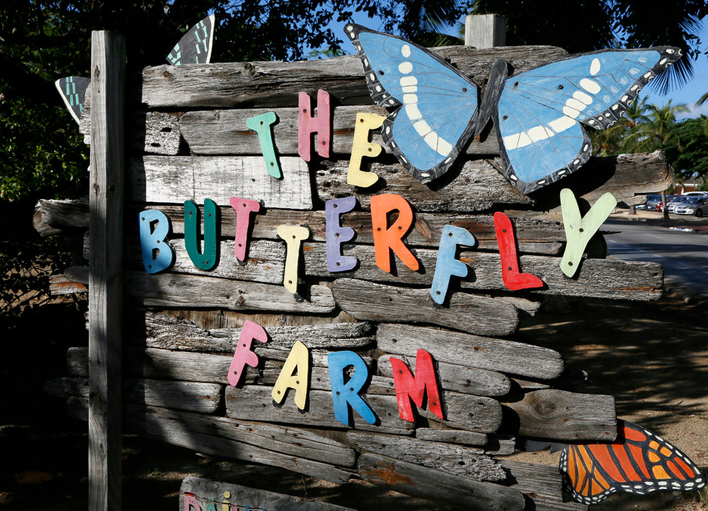 The Butterfly Farm op Aruba.