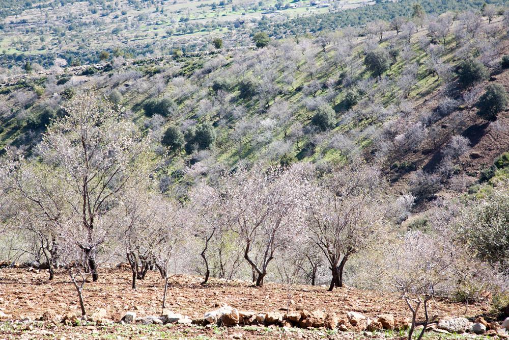 Verlaat de steden en je ziet enkel natuur in Marokko, Rondreis Marokko, koningssteden, camperrondreis,
