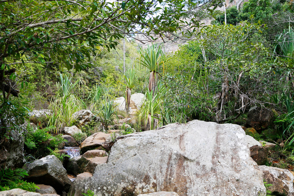 Een groene oase in Parc d'Isalo in Madagascar Op vakantie naar Madagascar, Madagaskar, rondreis