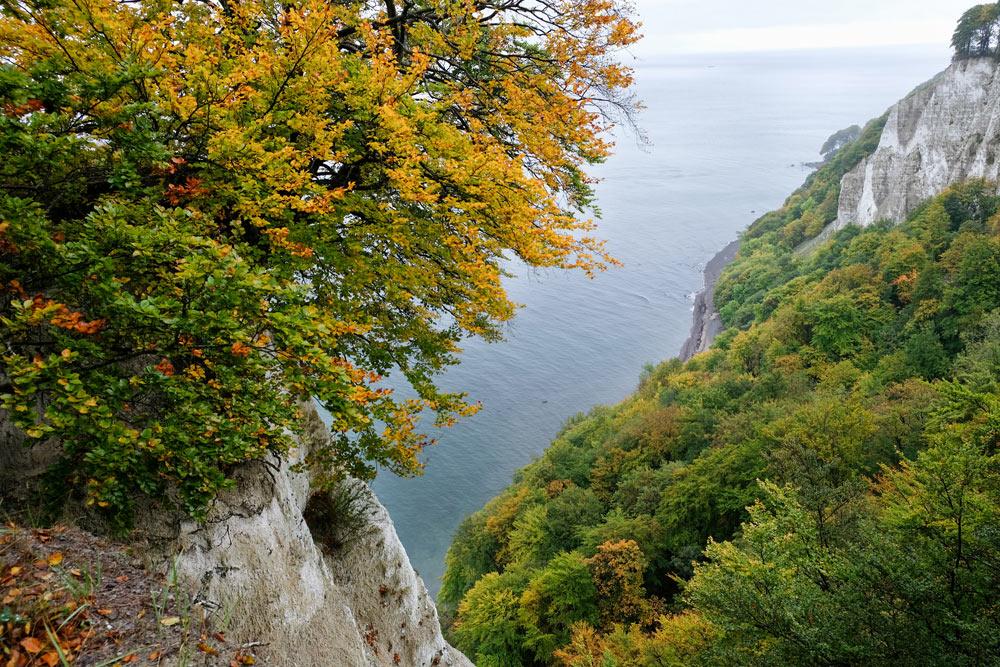 Jasmund National Park op Rugen in de herfst. Rondreis Duitse Oostzee, van Darss naar Rugen via Stralsund, Duitsland