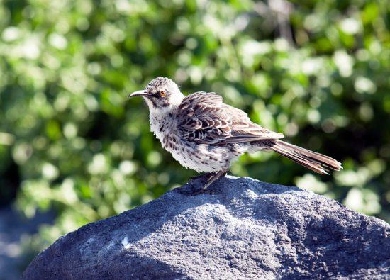 Vogeltjes kijken op Espanola, GalapagosRondreis Galapagos eilanden, Ecuador, cruise, expeditie