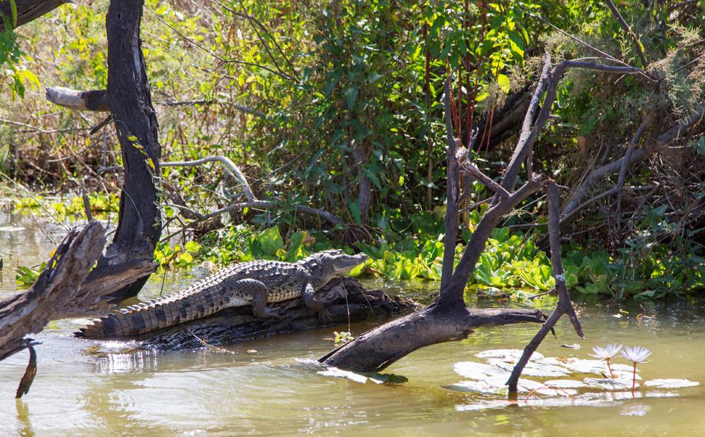 Wild spotten tijdens een boottocht in natuurpark Djoudj, Senegal. Rondreis Senegal, Afrika, tips vakantie