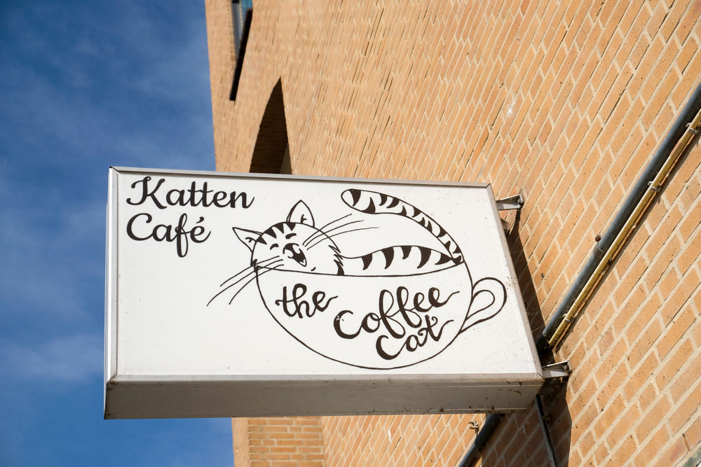 Kattencafé The Coffee Cat in Almere. Duurzame stedentrip Almere, Flevoland, Nederland, staycation