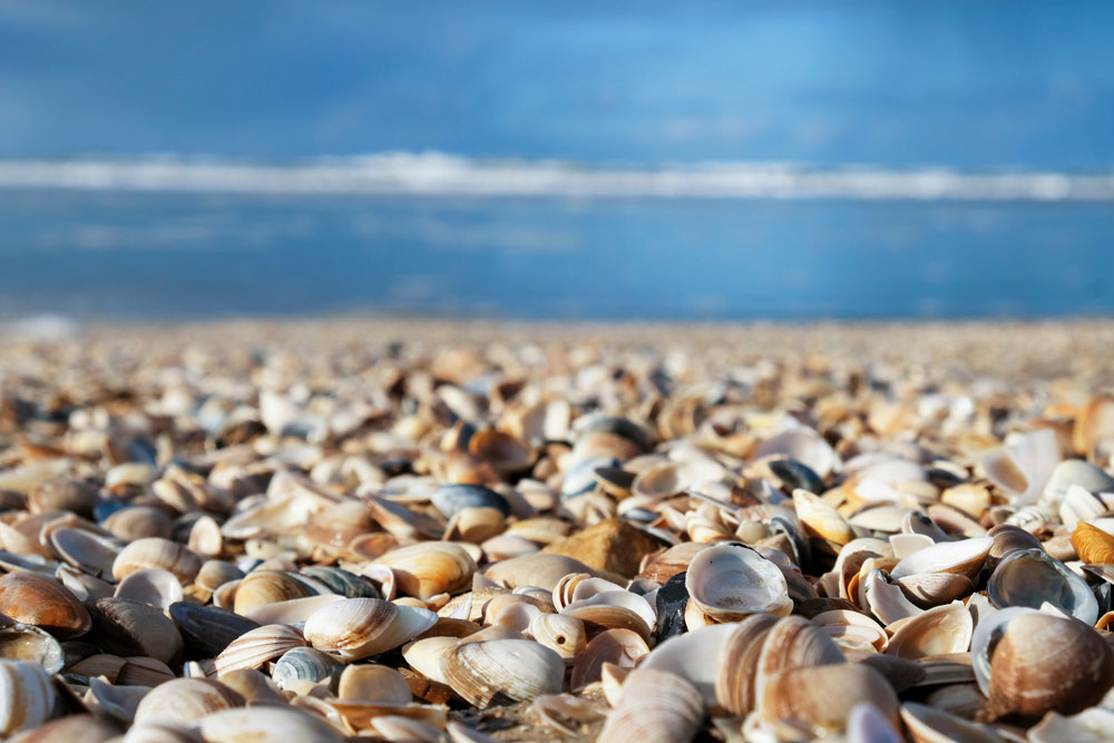 . Het strand van Camperduin, Nederland